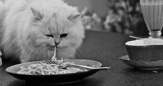 "| Cats Eating Pasta"" Is Taking the Internet By Storm and I Can't Handle ..."