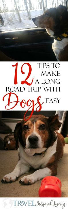 (ad) 12 Tips to make a long road trip with your #dog easy- including a #list  of things you don't want to forget when you pack. #MilkBone #IC #roadtrip #withpets #cars #tips #crosscountry