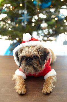 Querido Santa, este año me porté muy bien, bueno casi bien, bueno masomenos ... ¿podemos negociar?