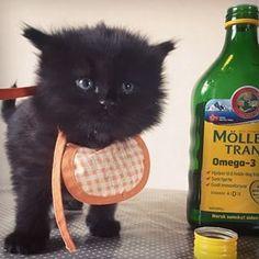 #medicine #möllerstran #healthy #omega3 #black #cutie #cat #fish #oil #vitamins #kittensfarm Omega 3, Fisher, Black Kittens, Photo And Video, Cats, Animals, Instagram, Gatos, Kitty Cats