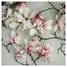 I love this Japanese magnolia, but am taken with most of Alicia Bock's etsy shop: