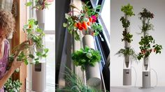 Windowfarms - Vertical Garden for Growing Herbs and Vegetables at Home via Kickstarter