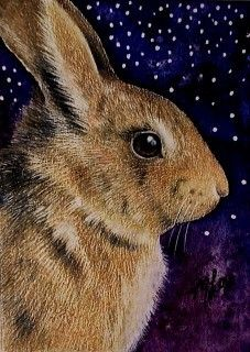 "Bunny Rabbit  ACEO ( 3.5"" by 2.5"") In colored pencil and ink"