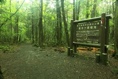 The Aokigahara forest near Fujikawaguchiko, Japan | 13 Terrifying Travel Destinations That Will Scare You To Death