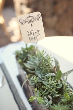 succulent centerpieces. rustic with a cool twist  Photography by http://ruettgers.com, Floral Design by http://eventsbymint.com