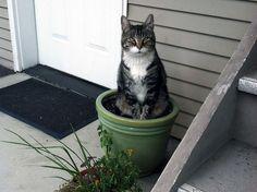Container Cat