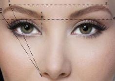 Sarasaurus: Master your own eyebrows