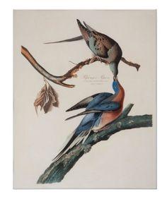 "Robert Havell after John James Audubon, ""Passenger Pigeon,"" hand-colored engraving and aquatint on Whatman wove paper Audubon Prints, Audubon Birds, Passenger Pigeon, Cincinnati Museum, Wall Art Wallpaper, Birds Of America, John James Audubon, Rare Birds, Vintage Art Prints"