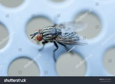 Find Closeup Fly Sitting On Metal Bench stock images in HD and millions of other royalty-free stock photos, illustrations and vectors in the Shutterstock collection. Thousands of new, high-quality pictures added every day. Close Up, Insects, Photo Editing, Royalty Free Stock Photos, Bench, Metal, Pictures, Image, Editing Photos