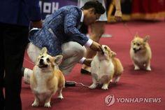 [연합뉴스 자료사진]