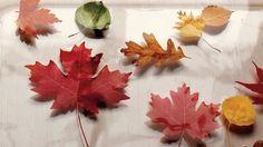 Preserve fall leaves.