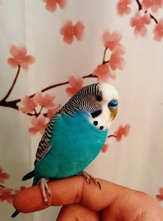 - Birds - How to Train Your Pet Budgie Perruche- Parakeet - budgie More. Cute Birds, Pretty Birds, Beautiful Birds, Animals Beautiful, Exotic Birds, Colorful Birds, Exotic Pets, Exotic Fish, Animals And Pets
