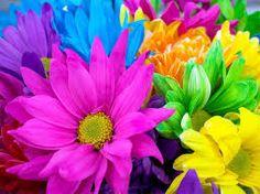 Resultado de imagen de colourful world