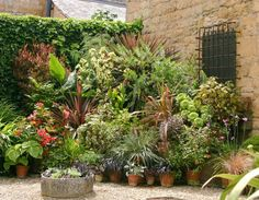 A cluster of interesting pots and planters makes a fine showcase for your latest seasonal plant purchases.
