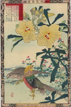 Kono Bairei Oiseaux