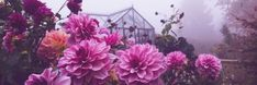 """Plantaholic on Twitter: """"Dahlia Blue Bayou in the garden today 😍 #gardening #Dahlia #Flowers… """" Dahlia Flowers, Pastel Flowers, Absolutely Gorgeous, Most Beautiful, Dancing Dolls, On A Clear Day, Holiday Places, Lavender Blue, Salvia"""
