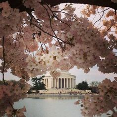 Beautiful Washington DC