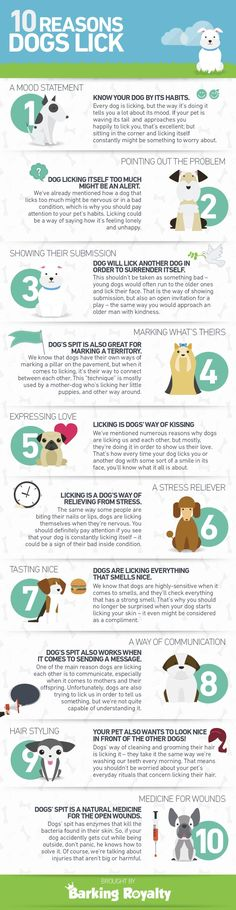 10 Reasons Why Dogs Lick Infographic #cathealthremedies #DogObedienceTipsandAdvice