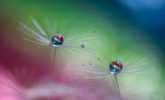 Rainbow magic by Miki Asai on 500px
