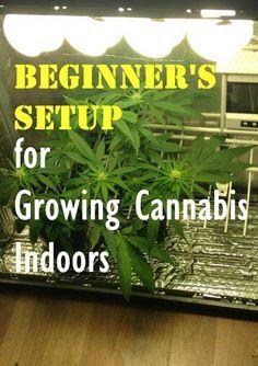 Beginner's Setup for Growing Cannabis Indoors Medical Cannabis Project Idea MaritimeVintage.com