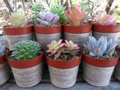 Something about succulents...also, can't deny, the fact that they're pretty hard to kill has large appeal too!