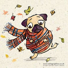 Mr Pug on a Windy Day | Flickr - Photo Sharing!