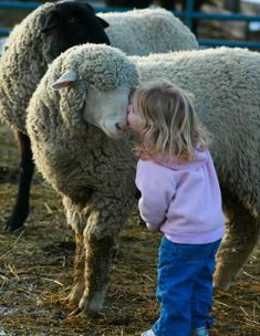 """Remember the true essence of your heart. Love and Compassion"" ♥ The picture links will take you to: All About Sheep"