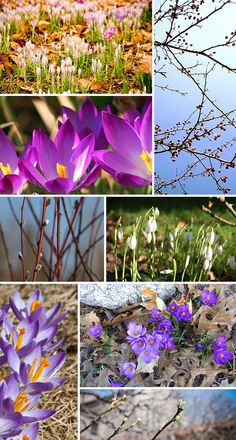 "images via: ""Signs of Spring"" by Burt Kauffmann, ""Spring"" by Bonbon, ""Sign of Spring"" by Andrew Fogg, ""Spring Crocii"" by Normanack, ""First Sign of Spring"" by Hajime Ando, ""Sign of Spring"" by Patrick, ""Signs of Spring"" by Gerry, ""Crocus"" by Duncan Harris"