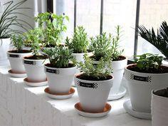DIY Modern Minimalist White Planters for a Windowsill Herb Garden
