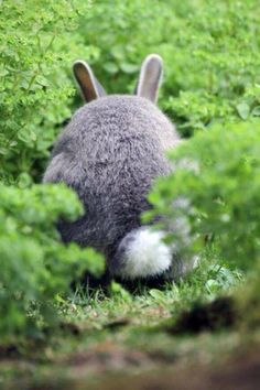 It's a bunny from behind. I finally see the Totoro!
