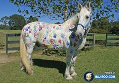 funny painted animals body paint pics images Strangely Colored Animals (27 Photos)