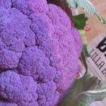 Se! Et Lilla øko-blomkål med  Anthocyanin flavonoider :)