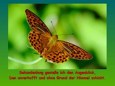 Sekundenlang - Helmuts Skripts Insects, Animals, Pictures, Heaven, Animales, Animaux, Animal, Bugs, Animais