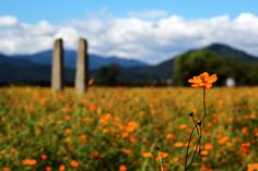 """500px / Photo """"Flowers and Stone Flagpole"""" by Twostar K"""