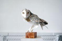 Escultura de papel de Anna Wili Highfield