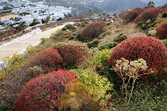 Folegandros- Isole Cicladi