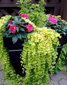 Honestly - I just want this because I want a plant called Creeping Jenny. container garden: A=Creeping Jenny B=Magenta Impatiens C=Swallowtail Coleus. Container Flowers, Container Plants, Container Gardening, Container Design, Small Yard Landscaping, Landscaping Ideas, Pot Jardin, Garden Inspiration, Garden Ideas