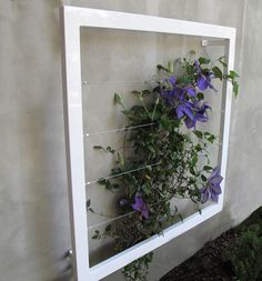 frame and wire to frame plant fairly simple DIY - use plastic frames