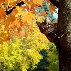 Autumn Cat Peeking Around Tree.