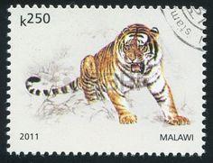 MALAWI - CIRCA 2011: stamp printed by Malawi, shows Tiger, circa 2011