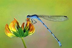 As plantas podem ajudar no combate ao Aedes Egypt! Veja como no Simples Decoração