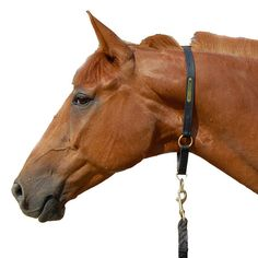 Horse Leather Grooming Halter - perfect for face-free grooming and safe bridling on Etsy, kr202,02