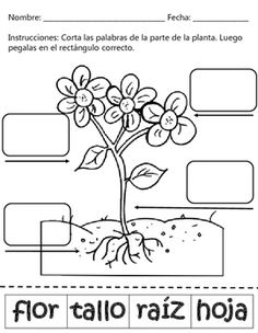 This Science Product contains 2 worksheets both English and Spanish. The students will have fun learning and matching the parts of the plant. Spanish Worksheets, Spanish Teaching Resources, Learning Spanish, Kids Learning, Letter P Activities, Pre K Activities, Teaching Activities, Primary Science, Kindergarten Science