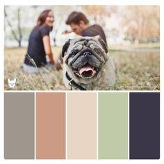 'Posh Pug' Luxury Color Palette for Pet Brand Inspiration