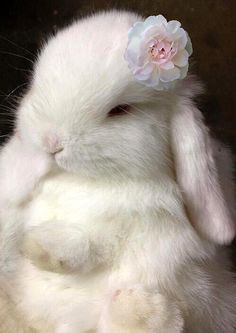 Bunny with a flower ♡