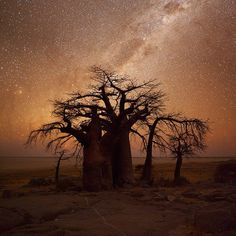 landscape photo of the milkyway over the boabab trees of Kubu Island in Botswana by Hougaard Malan