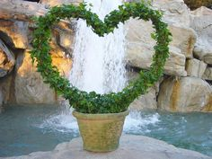 Simple heart shaped topiary - you could probably use wire hangers to shape the heart or you could just buy the heart shape at nursery or garden store