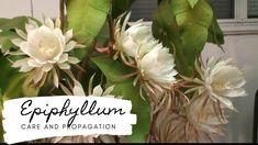 Propagation, The Creator, Cactus, Bloom, Night, Garden, Party, Youtube, Garten