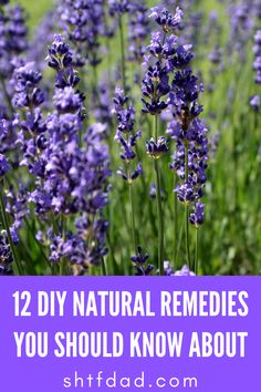 Even simple camping trips can turn into a nightmare without the necessary medication you need to survive! Natural Remedies, Thinking Of You, Survival, Canning, Nature, Diy, Thinking About You, Bricolage, Natural Treatments