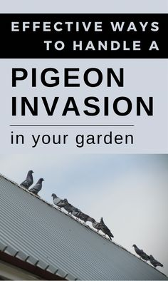 Effective Ways To Handle A Pigeon Invasion In Your Garden